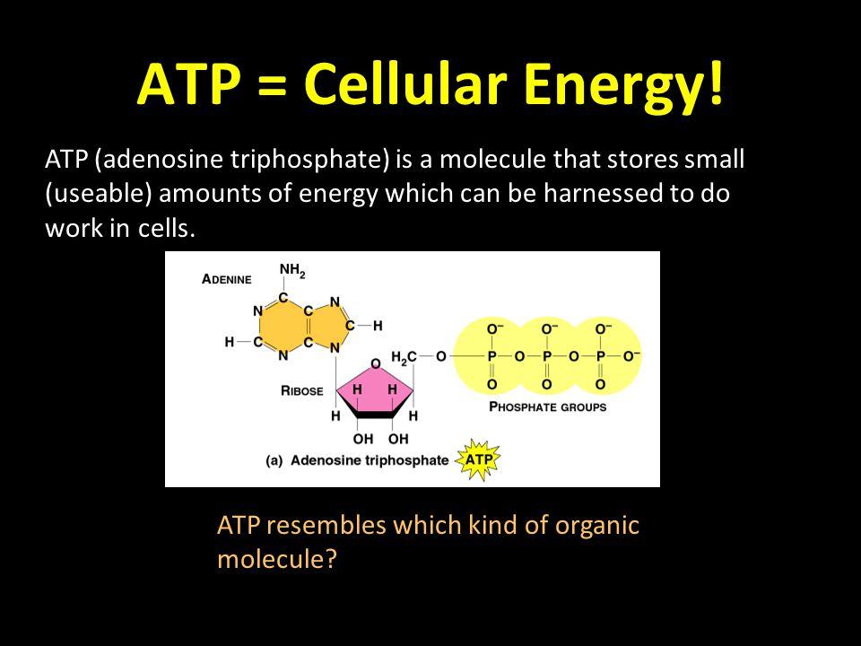 ATP = Cellular Energy.