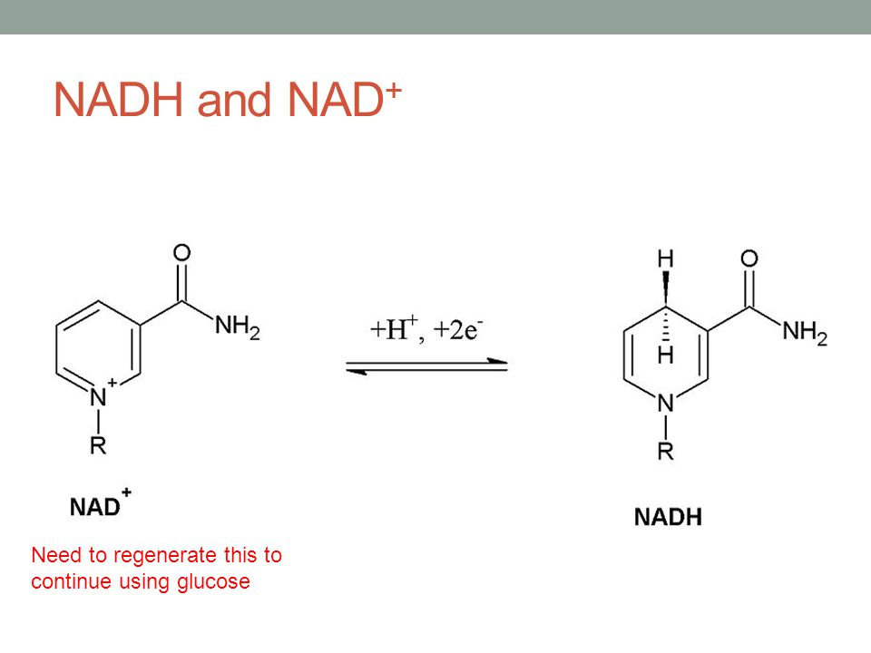 NADH and NAD + Need to regenerate this to continue using glucose