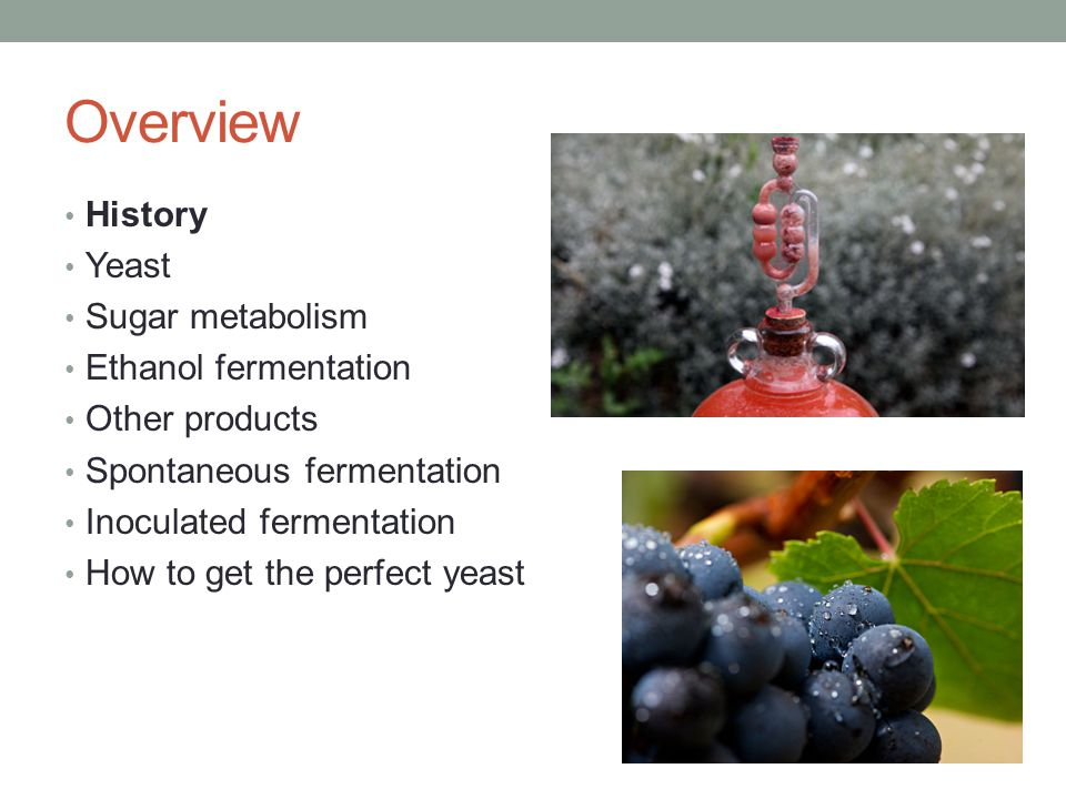 Overview History Yeast Sugar metabolism Ethanol fermentation Other products Spontaneous fermentation Inoculated fermentation How to get the perfect yeast