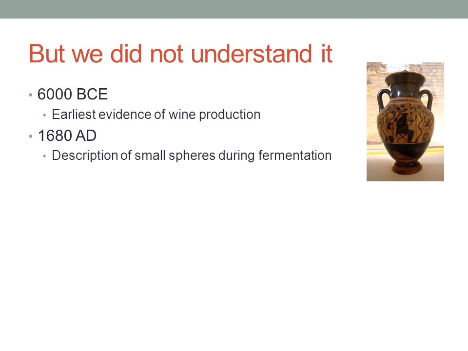 But we did not understand it 6000 BCE Earliest evidence of wine production 1680 AD Description of small spheres during fermentation