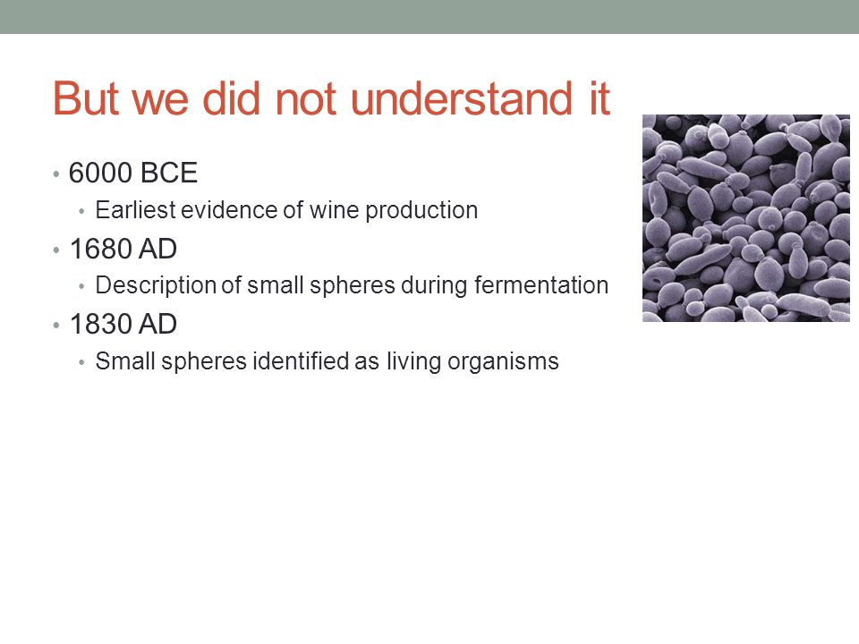 But we did not understand it 6000 BCE Earliest evidence of wine production 1680 AD Description of small spheres during fermentation 1830 AD Small spheres identified as living organisms