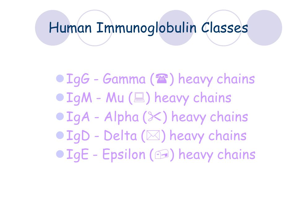 Human Immunoglobulin Classes IgG - Gamma (  ) heavy chains IgM - Mu (  ) heavy chains IgA - Alpha (  ) heavy chains IgD - Delta (  ) heavy chains