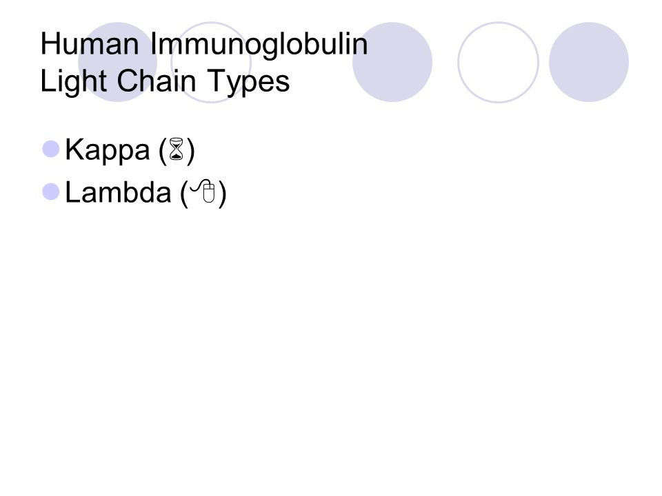 Human Immunoglobulin Light Chain Types Kappa (  ) Lambda (  )