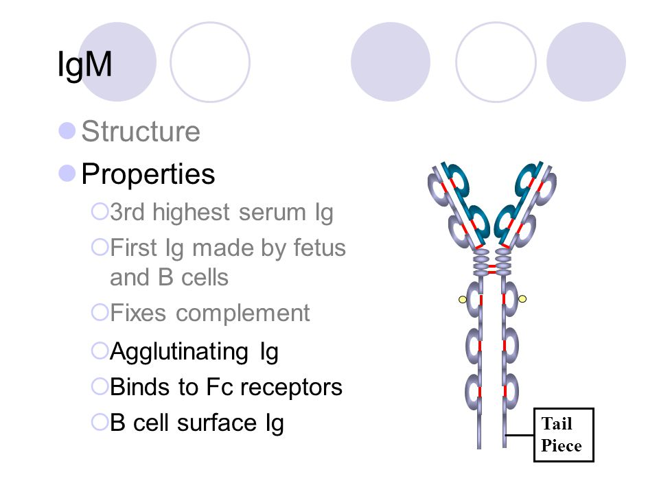 IgM Structure Properties  3rd highest serum Ig  First Ig made by fetus and B cells  Fixes complement Tail Piece  Agglutinating Ig  Binds to Fc re