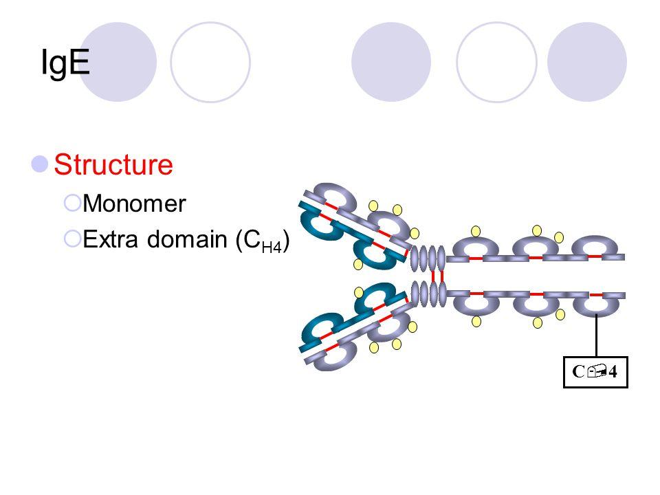 IgE Structure  Monomer  Extra domain (C H4 ) C4C4