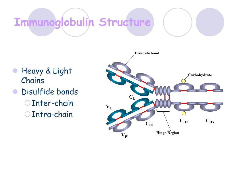 Immunoglobulin Structure Heavy & Light Chains Disulfide bonds  Inter-chain  Intra-chain C H1 VLVL CLCL VHVH C H2 C H3 Hinge Region Carbohydrate Disu