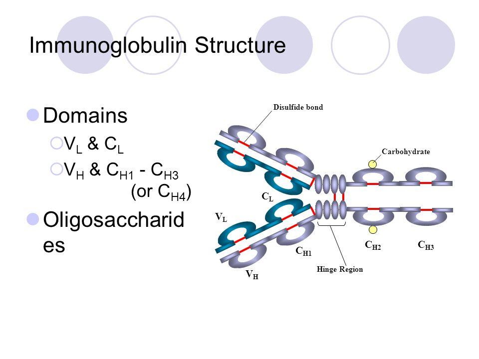 Immunoglobulin Structure Domains  V L & C L  V H & C H1 - C H3 (or C H4 ) Oligosaccharid es C H1 VLVL CLCL VHVH C H2 C H3 Hinge Region Carbohydrate Disulfide bond