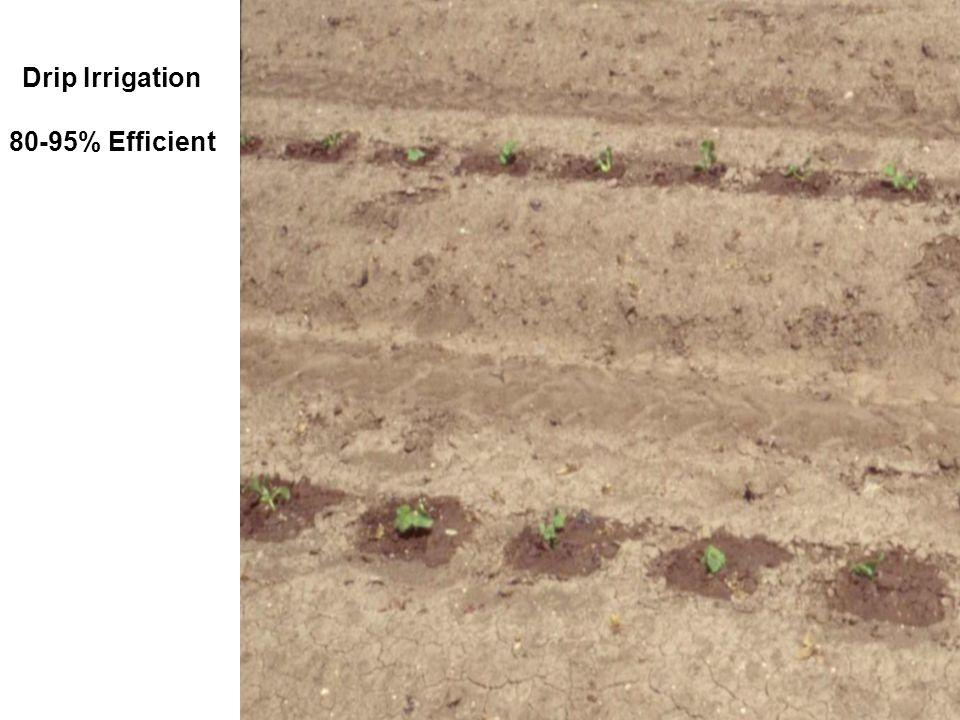Drip Irrigation 80-95% Efficient