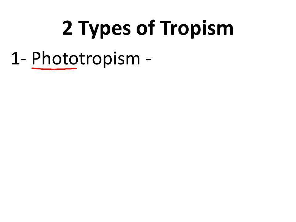 2 Types of Tropism 1- Phototropism – a plant's response to light