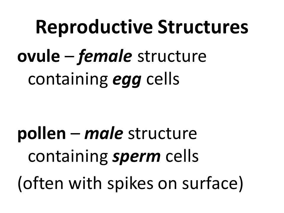 Reproductive Structures ovule – female structure containing egg cells pollen – male structure containing sperm cells (often with spikes on surface)