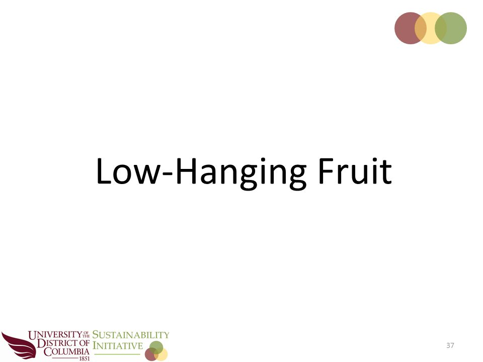 37 Low-Hanging Fruit