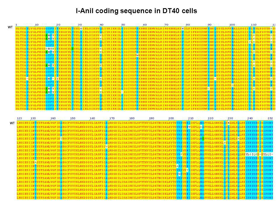 I-Anil coding sequence in DT40 cells WT