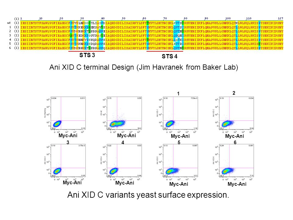 Vector digestion Yeast transformtion to establish Ani XID-C library (9×10 6 ) Six combo error prone PCR First round sorting based on Myc-Ani expression.