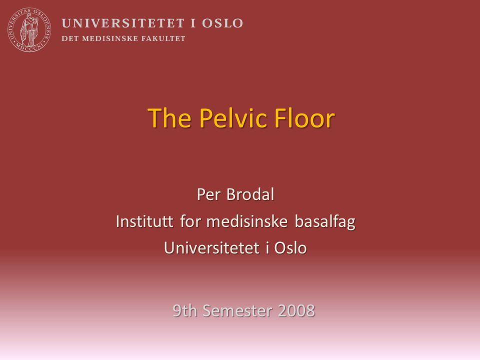 The Pelvic Floor Per Brodal Institutt for medisinske basalfag Universitetet i Oslo 9th Semester 2008