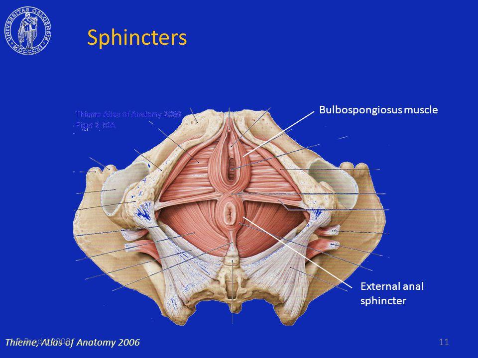 Sphincters Thieme, Atlas of Anatomy 2006 Bulbospongiosus muscle External anal sphincter 11 P. Brodal 2008