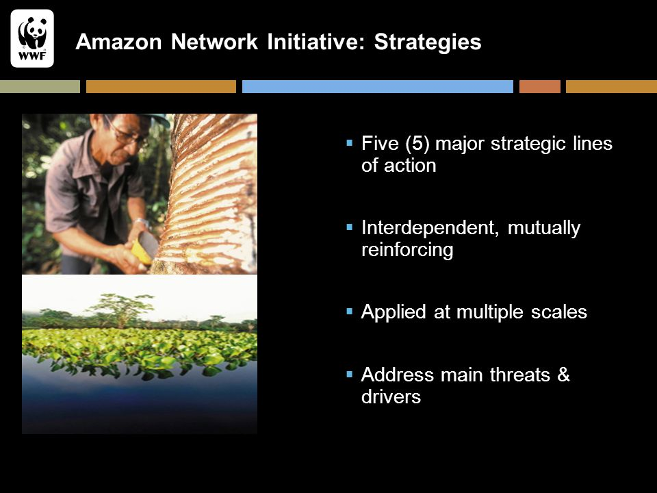 Amazon Network Initiative: Strategies  Five (5) major strategic lines of action  Interdependent, mutually reinforcing  Applied at multiple scales 