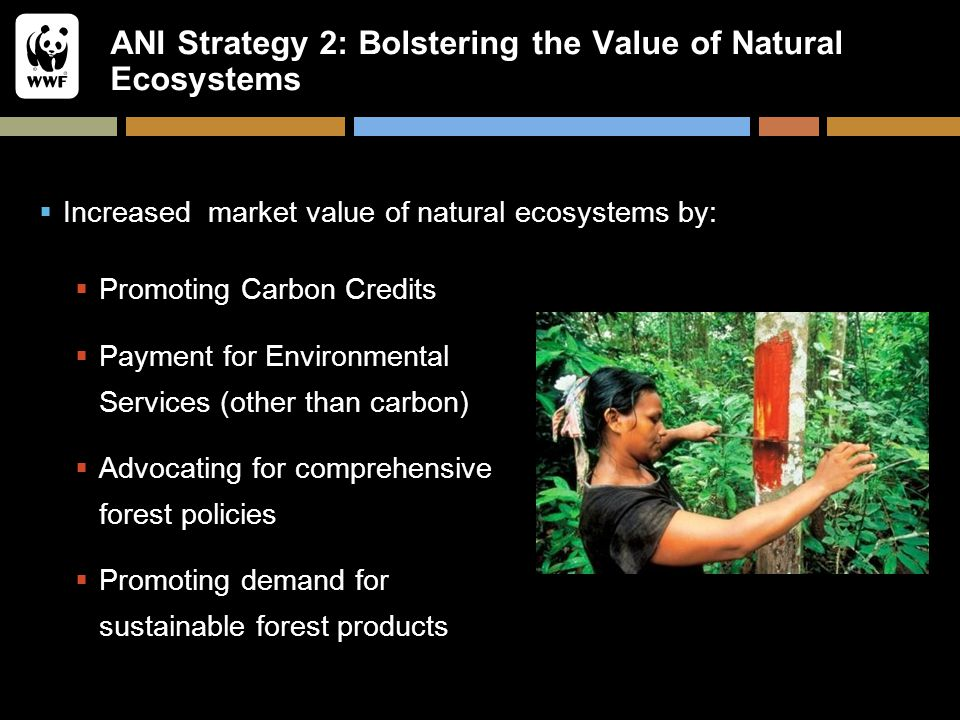 ANI Strategy 2: Bolstering the Value of Natural Ecosystems  Increased market value of natural ecosystems by:  Promoting Carbon Credits  Payment for