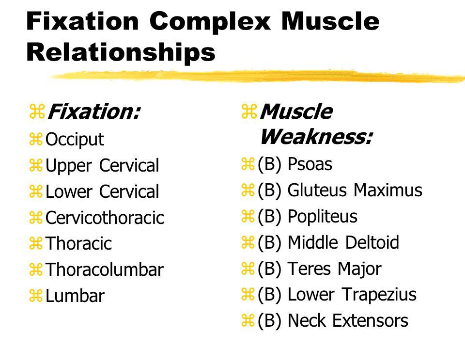 Fixation Complex Muscle Relationships zFixation: zOcciput zUpper Cervical zLower Cervical zCervicothoracic zThoracic zThoracolumbar zLumbar z Muscle Weakness: z (B) Psoas z (B) Gluteus Maximus z (B) Popliteus z (B) Middle Deltoid z (B) Teres Major z (B) Lower Trapezius z (B) Neck Extensors