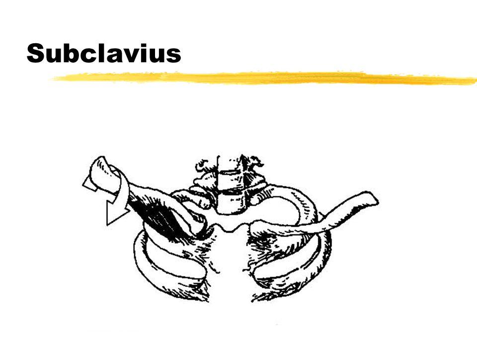 Subclavius
