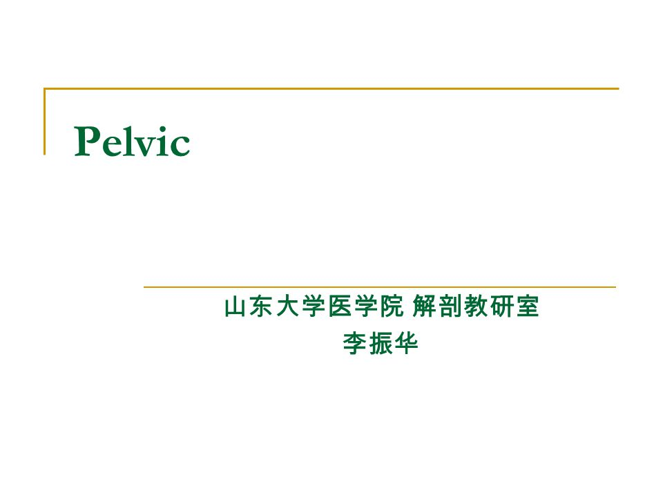 Pelvic 山东大学医学院 解剖教研室 李振华