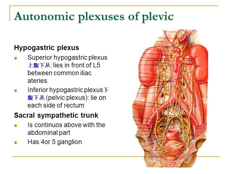 Autonomic plexuses of plevic Hypogastric plexus Superior hypogastric plexus 上腹下丛 : lies in front of L5 between common iliac ateries Inferior hypogastr