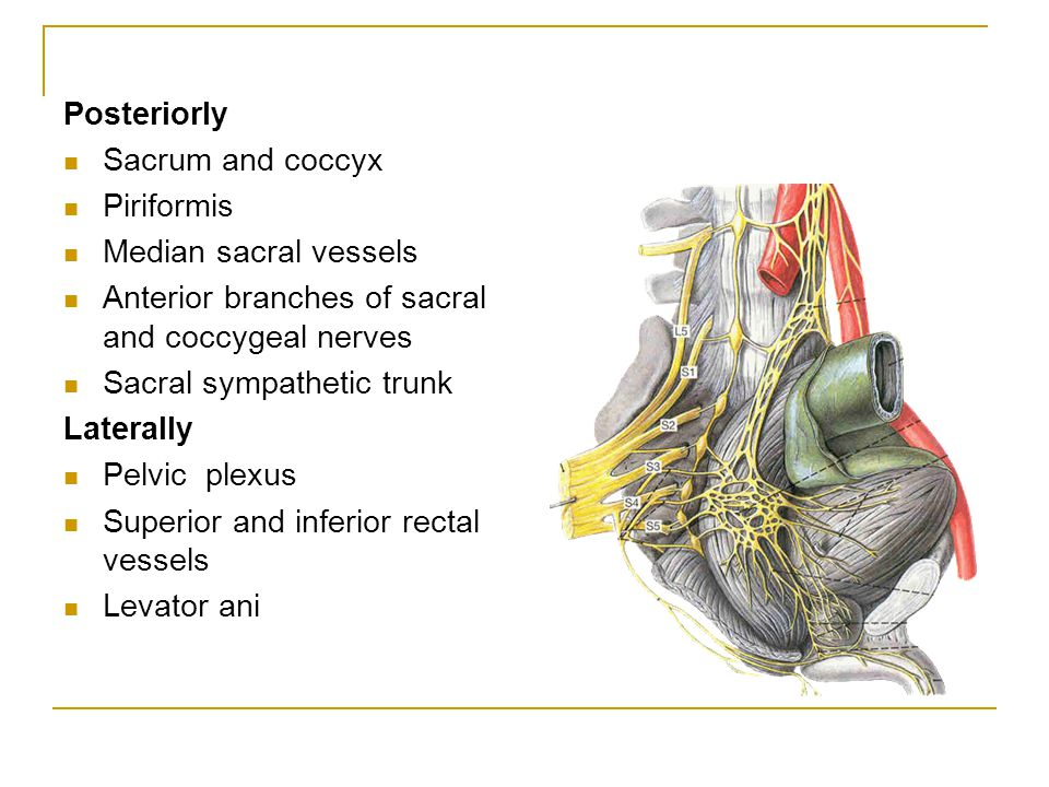 Posteriorly Sacrum and coccyx Piriformis Median sacral vessels Anterior branches of sacral and coccygeal nerves Sacral sympathetic trunk Laterally Pel