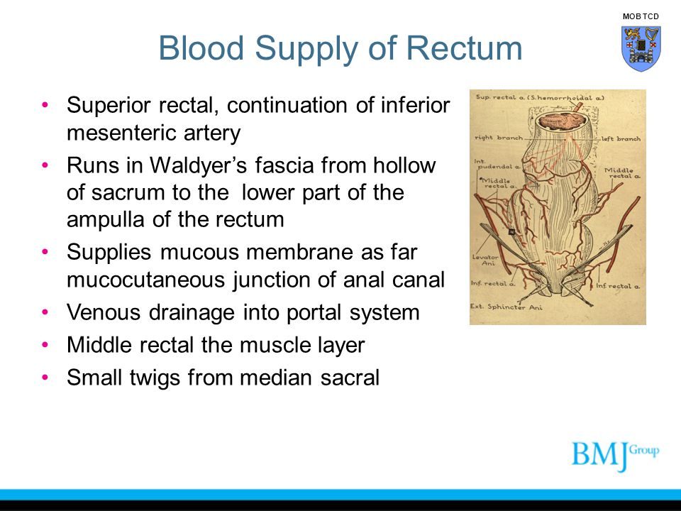 Blood Supply of Rectum Superior rectal, continuation of inferior mesenteric artery Runs in Waldyer's fascia from hollow of sacrum to the lower part of
