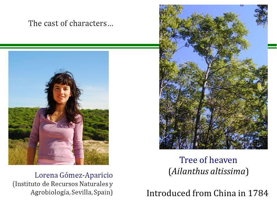 Lorena Gómez-Aparicio (Instituto de Recursos Naturales y Agrobiología, Sevilla, Spain) Tree of heaven (Ailanthus altissima) Introduced from China in 1784 The cast of characters…
