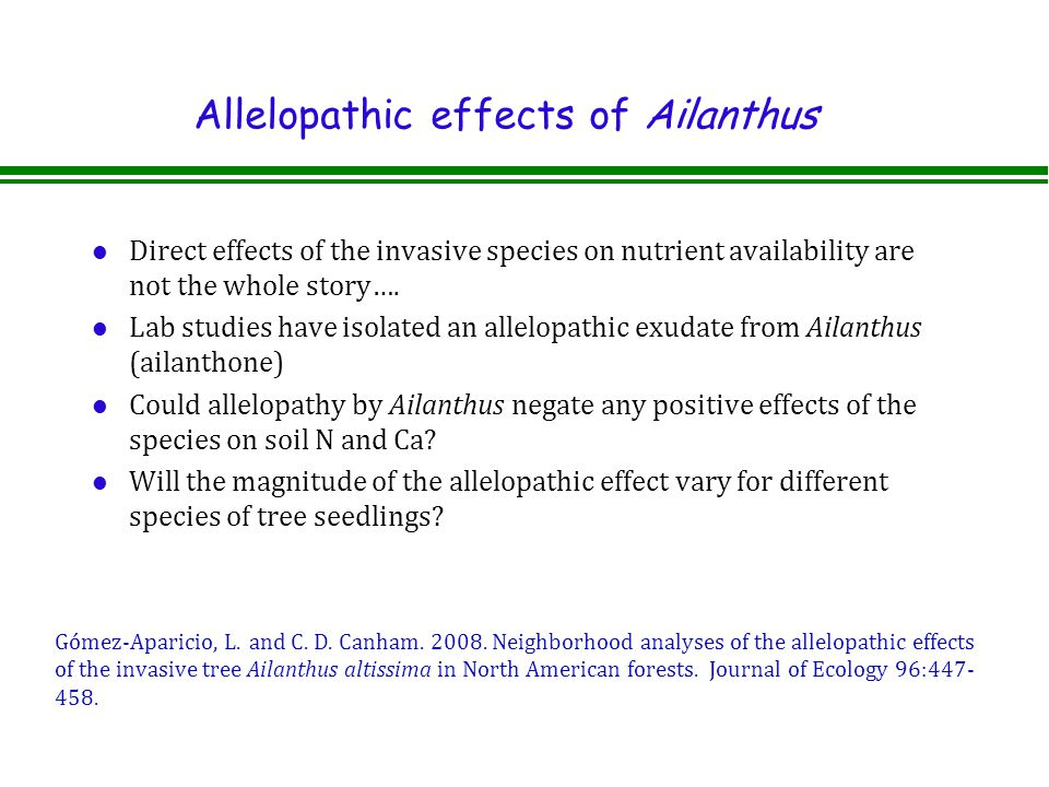 Allelopathic effects of Ailanthus l Direct effects of the invasive species on nutrient availability are not the whole story….