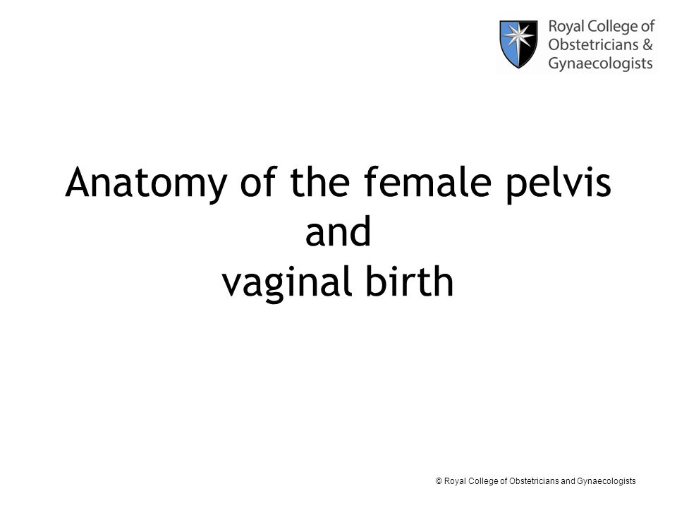 © Royal College of Obstetricians and Gynaecologists Anatomy of the female pelvis and vaginal birth
