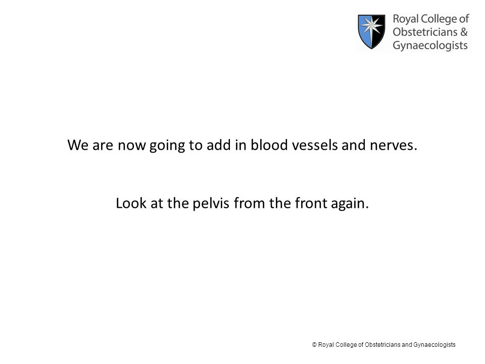 © Royal College of Obstetricians and Gynaecologists We are now going to add in blood vessels and nerves. Look at the pelvis from the front again.