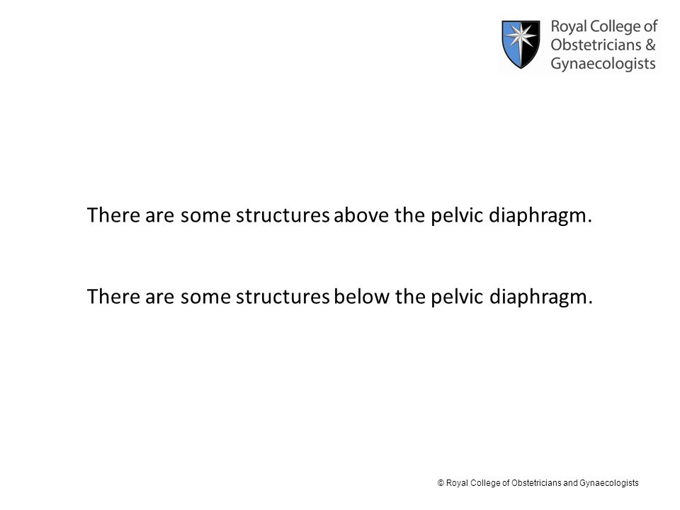 © Royal College of Obstetricians and Gynaecologists There are some structures above the pelvic diaphragm. There are some structures below the pelvic d