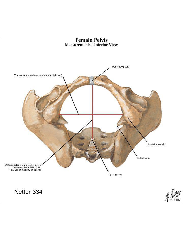 Plate 338 Urethra Vagina Rectum Piriformis m.Tendinous arch Pubococcygeus m.