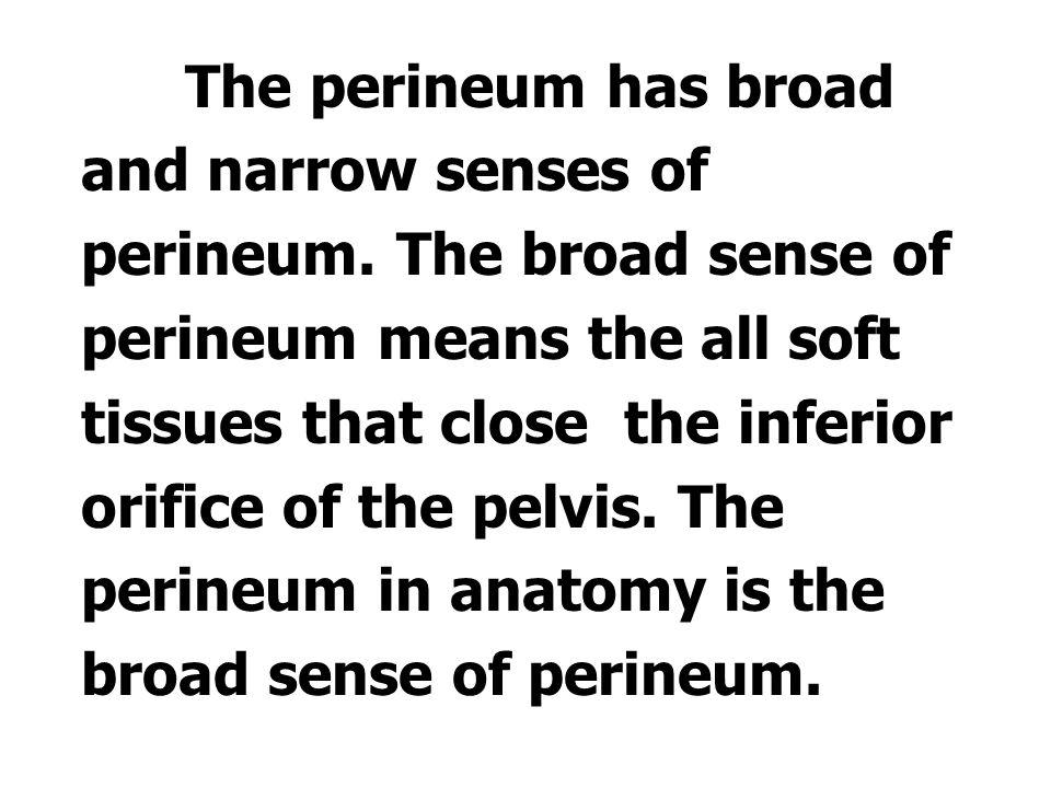 Ⅱ.Perineum 会阴 1. The conception of perineum