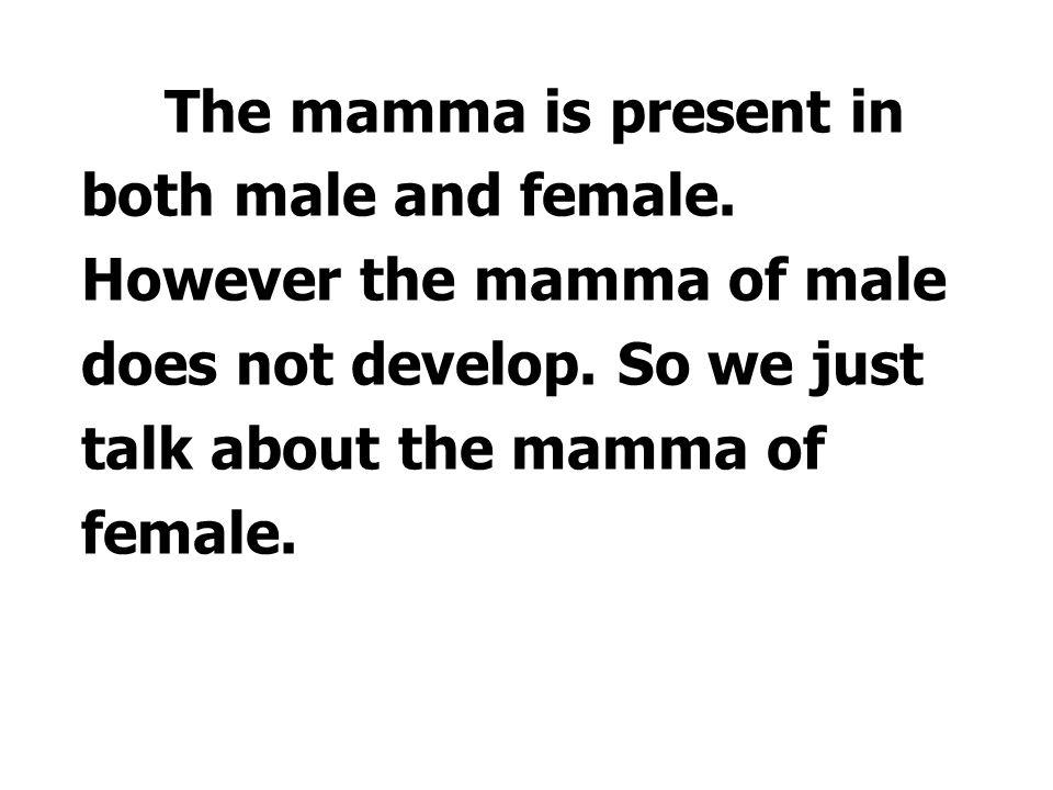 Ⅰ.Mamma 乳房