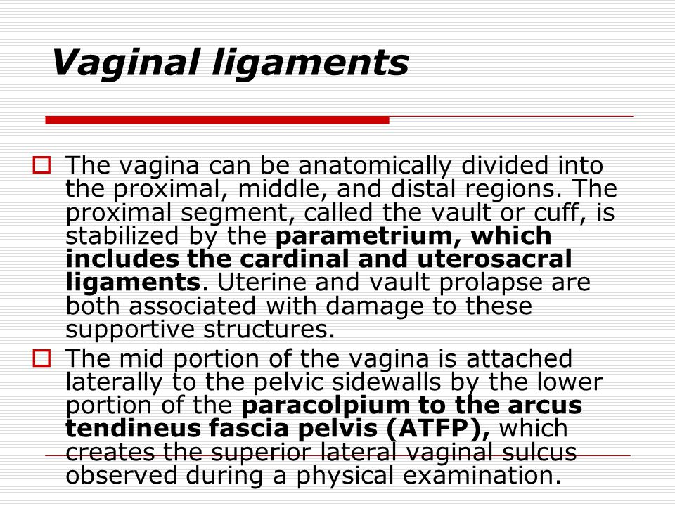 Supporting ligaments and fascia  The uterosacral ligaments originate from condensation of the fibrous connective tissue overlying the sacral promonto