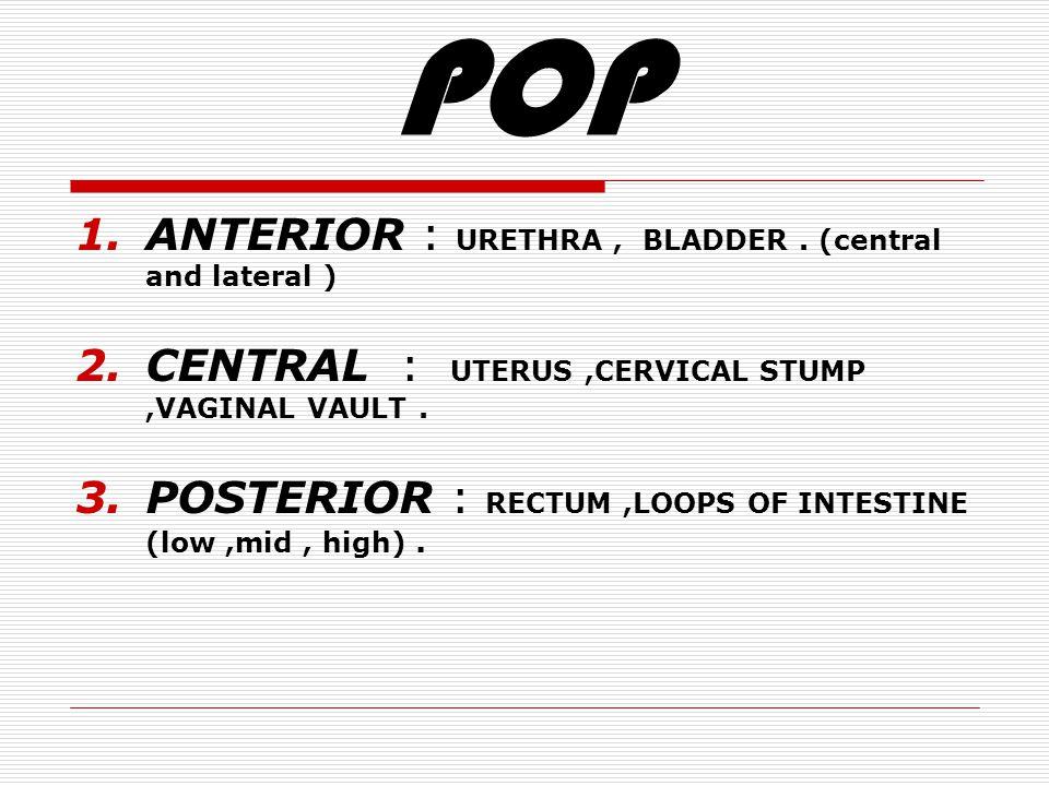 POP 1.ANTERIOR : URETHRA, BLADDER.