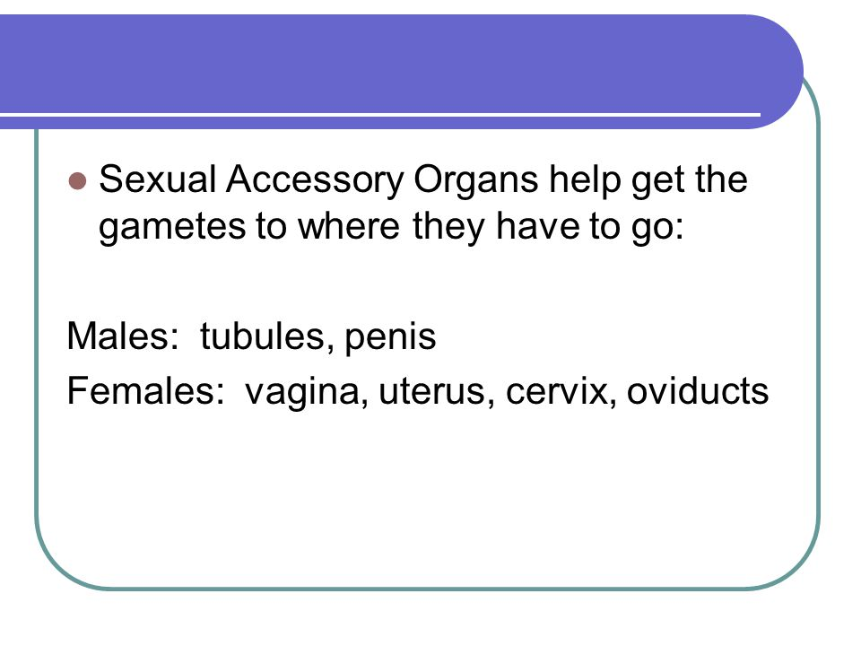 Sexual Accessory Organs help get the gametes to where they have to go: Males: tubules, penis Females: vagina, uterus, cervix, oviducts