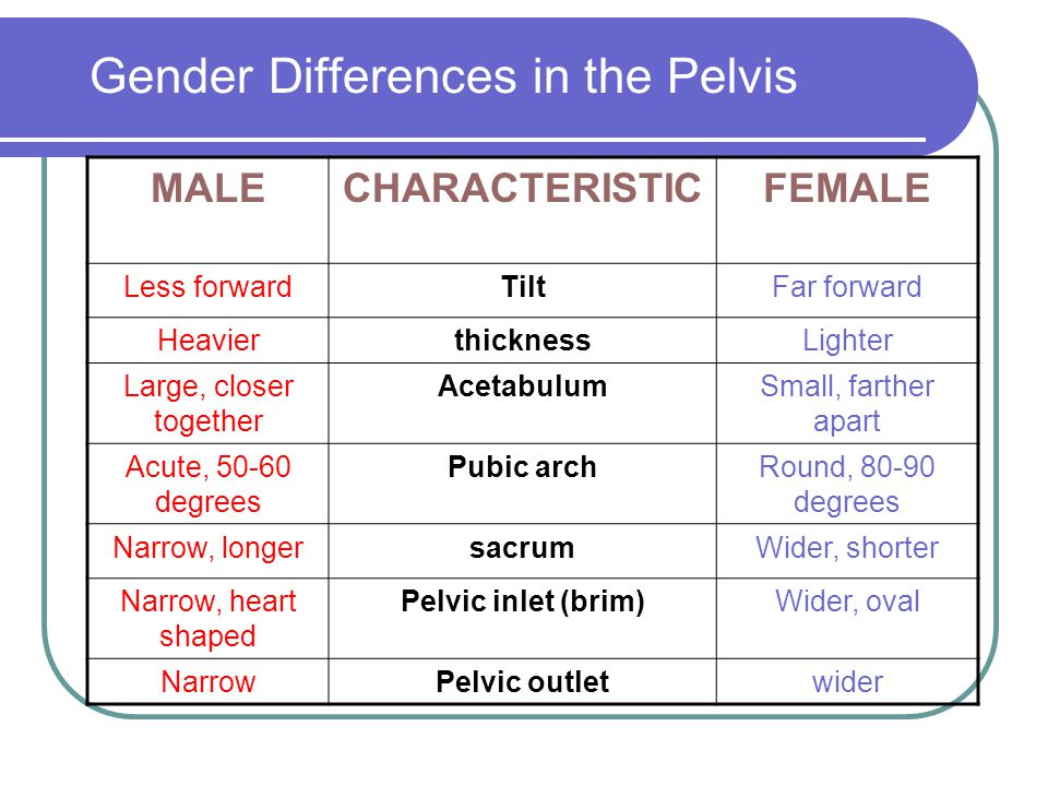 Gender Differences in the Pelvis MALECHARACTERISTICFEMALE Less forwardTiltFar forward HeavierthicknessLighter Large, closer together AcetabulumSmall, farther apart Acute, 50-60 degrees Pubic archRound, 80-90 degrees Narrow, longersacrumWider, shorter Narrow, heart shaped Pelvic inlet (brim)Wider, oval NarrowPelvic outletwider
