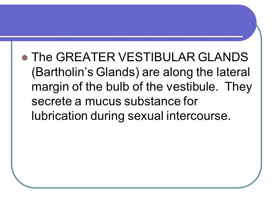 The GREATER VESTIBULAR GLANDS (Bartholin's Glands) are along the lateral margin of the bulb of the vestibule.