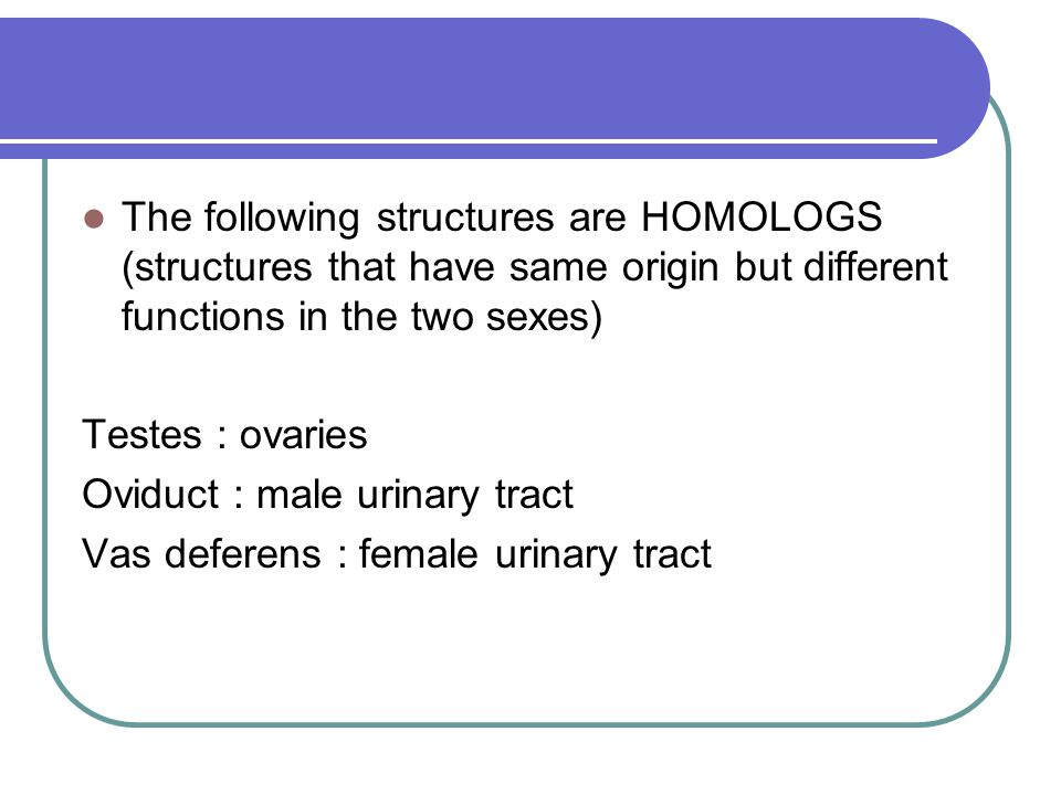 The following structures are HOMOLOGS (structures that have same origin but different functions in the two sexes) Testes : ovaries Oviduct : male urin