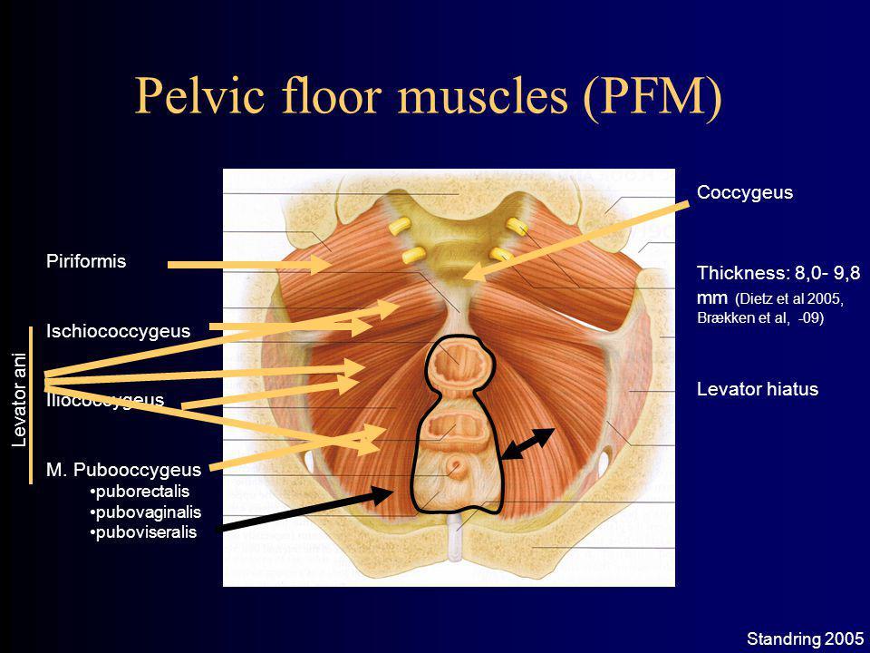 Pelvic floor muscles (PFM) Piriformis Ischiococcygeus Iliococcygeus M.