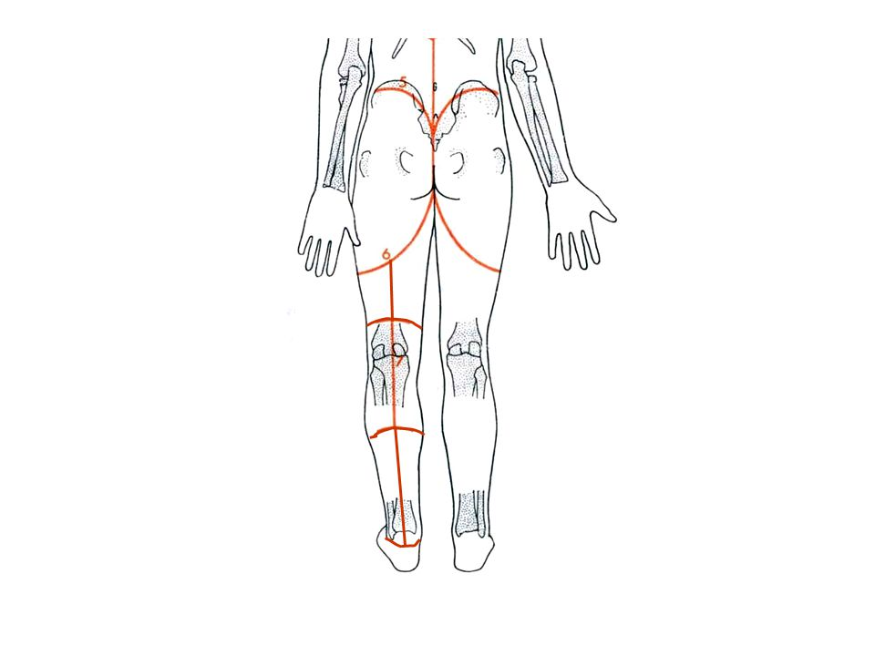 The gluteal region and back of thigh and leg