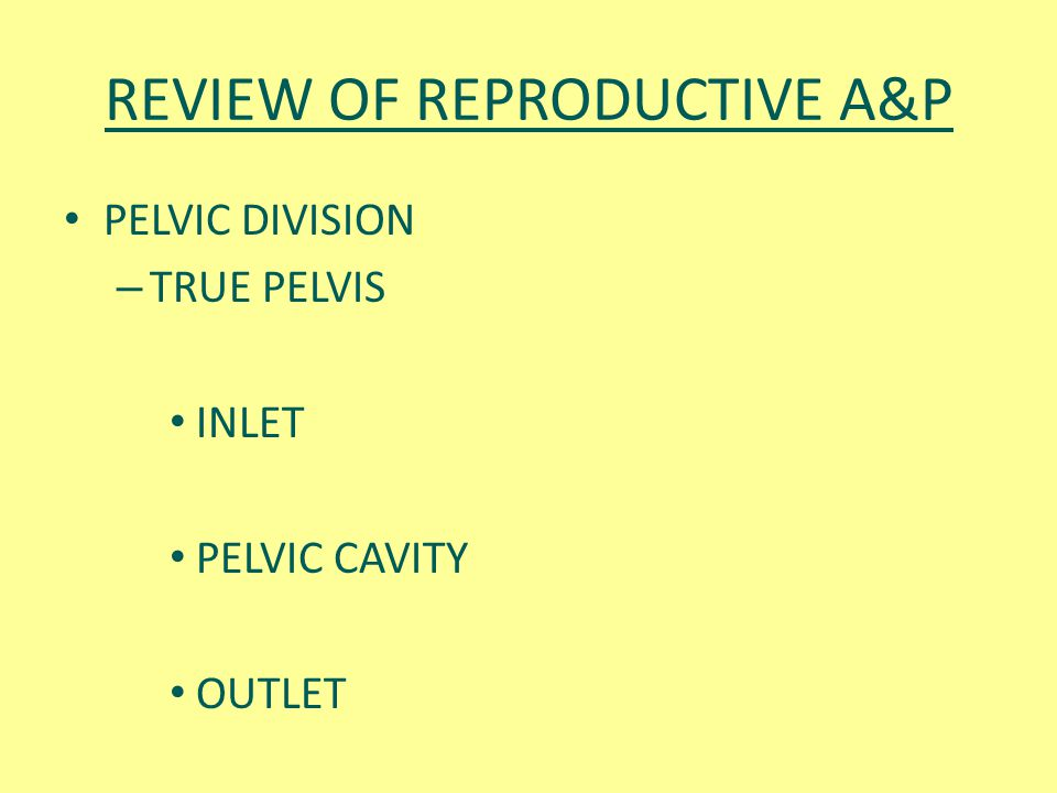 REVIEW OF REPRODUCTIVE A&P PELVIC DIVISION – TRUE PELVIS INLET PELVIC CAVITY OUTLET