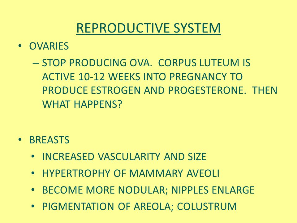 REPRODUCTIVE SYSTEM OVARIES – STOP PRODUCING OVA. CORPUS LUTEUM IS ACTIVE 10-12 WEEKS INTO PREGNANCY TO PRODUCE ESTROGEN AND PROGESTERONE. THEN WHAT H