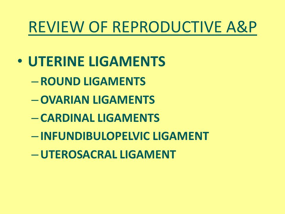REVIEW OF REPRODUCTIVE A&P UTERINE LIGAMENTS – ROUND LIGAMENTS – OVARIAN LIGAMENTS – CARDINAL LIGAMENTS – INFUNDIBULOPELVIC LIGAMENT – UTEROSACRAL LIG