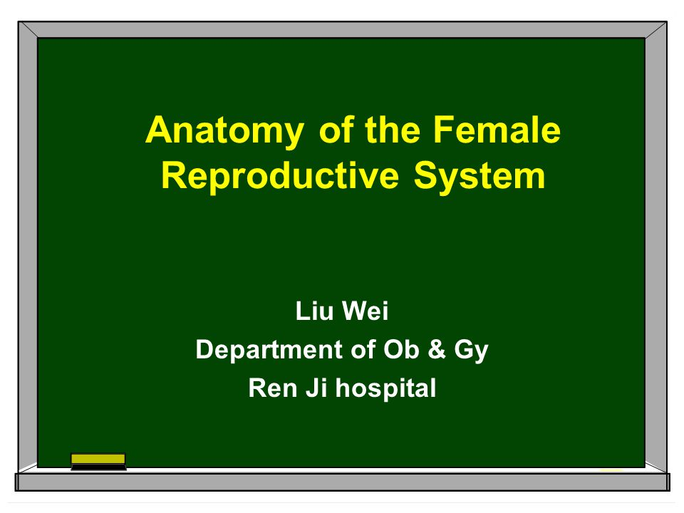 Anatomy of the Female Reproductive System Liu Wei Department of Ob & Gy Ren Ji hospital