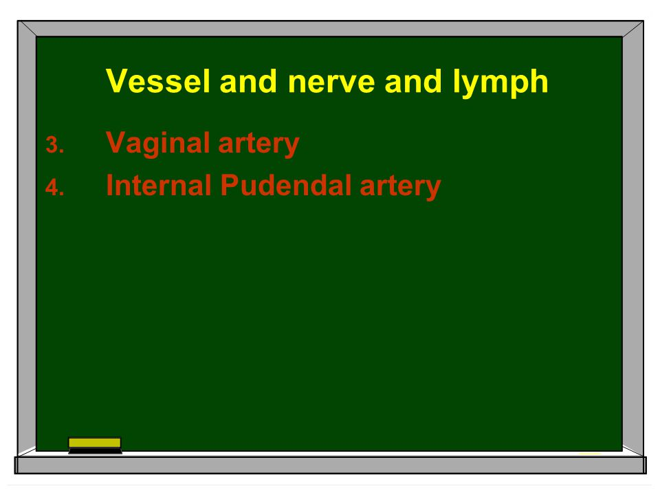 Vessel and nerve and lymph  Vaginal artery  Internal Pudendal artery