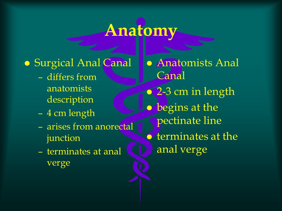 l anorectal ring –junction of the rectum and anal canal –composed of internal sphincter and puborectalis –division results in incontinence