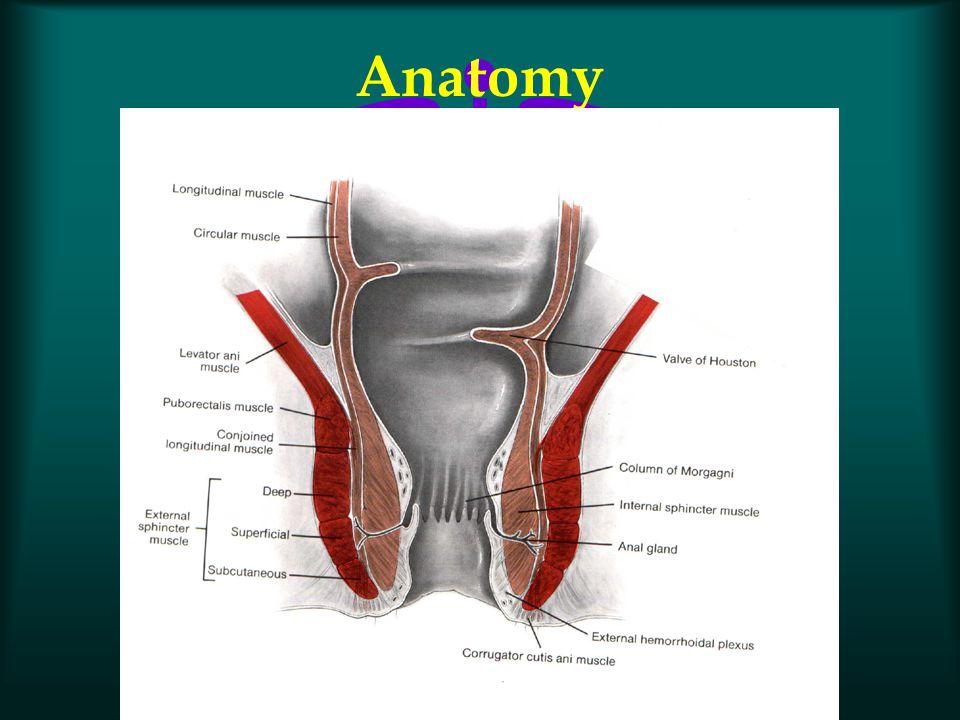 Innervation l Internal anal sphincter –Sympathetic l L5 –Parasympathetic l S2, S3, S4 l Levator Ani complex –S2, S3, S4 –perineal branch of the pudendal nerve –inferior rectal nerves (puborectalis)
